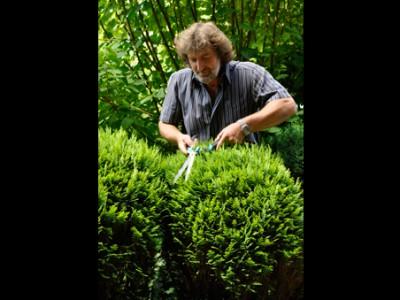 Heckenschnitt und diverse andere Gartenarbeiten