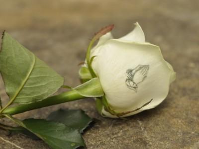 individuell bedruckte Rose z. B. als Wurfstrauß
