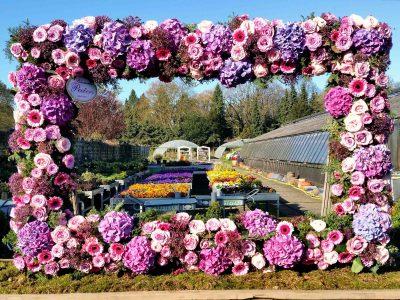 Gaertnerei Blumen Peeters